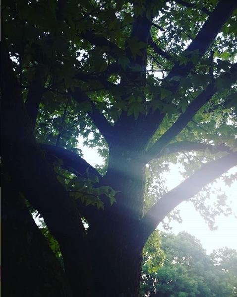 tree screen shot (2).png