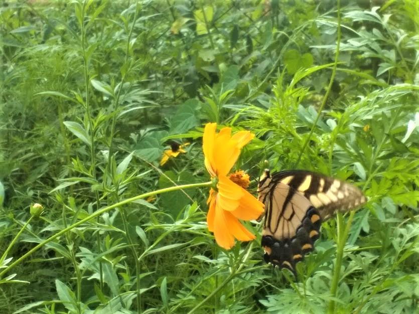 Butterfly #1 (2)