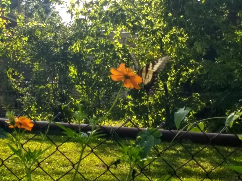 Butterfly #15