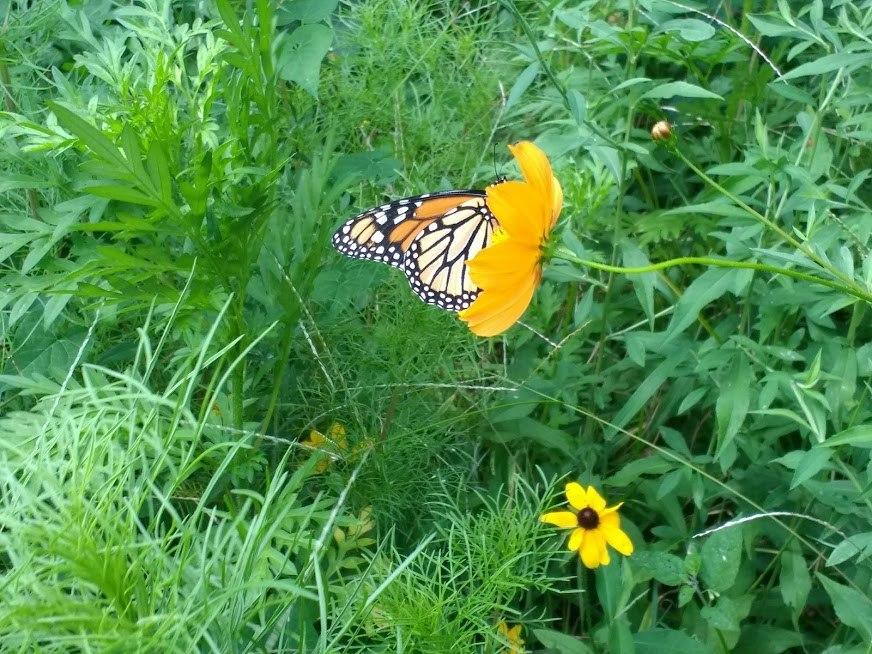 Butterfly #16.jpg
