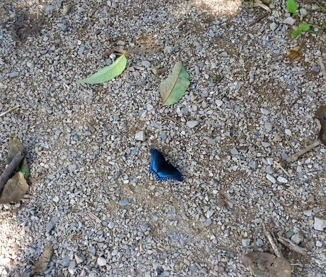 Butterfly #19.jpg
