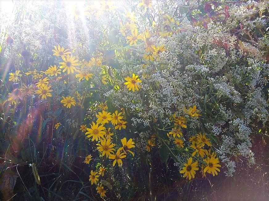 sunlight and flowers